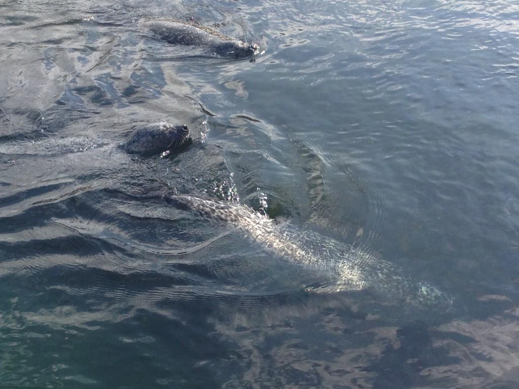 OCEANOGRÀFIC- oceanografic-weddel-seals
