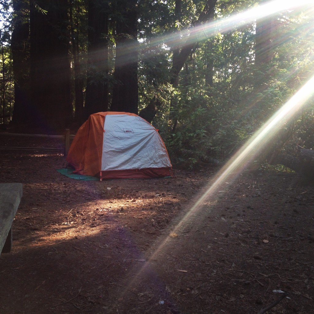 Camping in Butano State Park-camping-in-