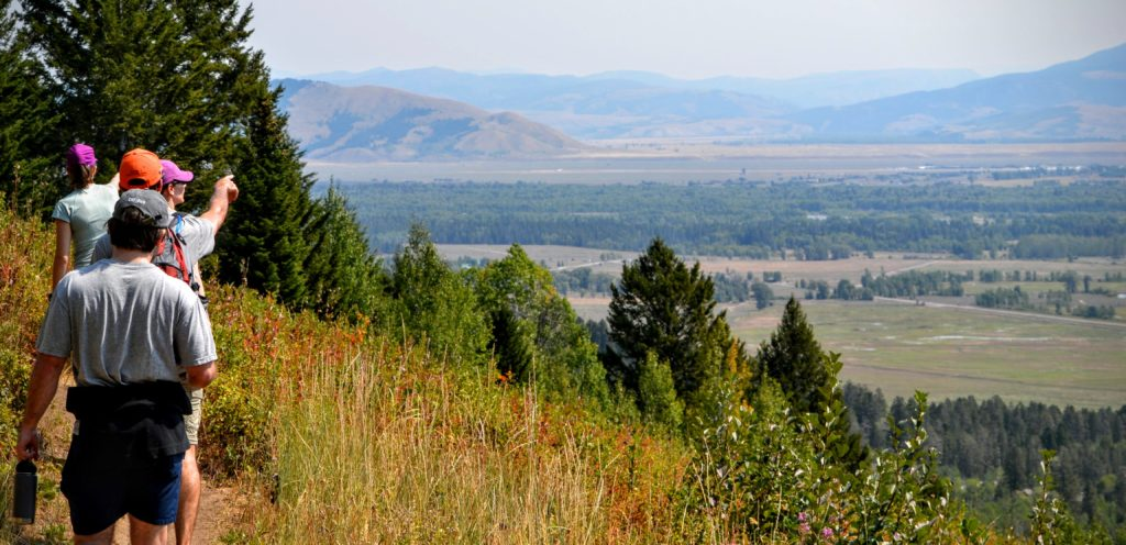 Teton Village Wyoming Hiking Wildflower Trail