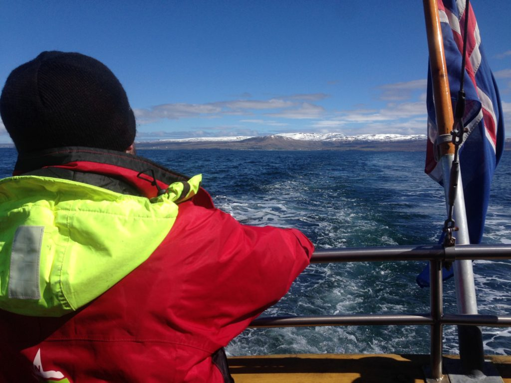 Sustainable, Ethical Travel in Iceland: Whale Watching