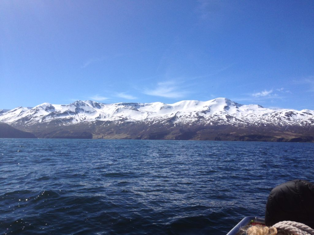 Iceland Ring Road Itinerary: Husavik Whale Watching North Sailing