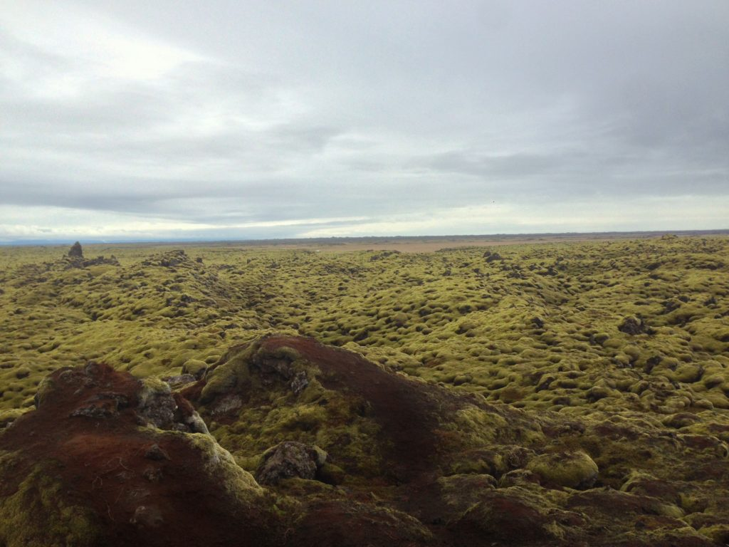 Sustainable, Ethical Travel in Iceland: Moss Covered Rocks